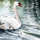 Gliding Gracefully, a Beautiful White Swan Watercolor so Peaceful by Jillian Crider