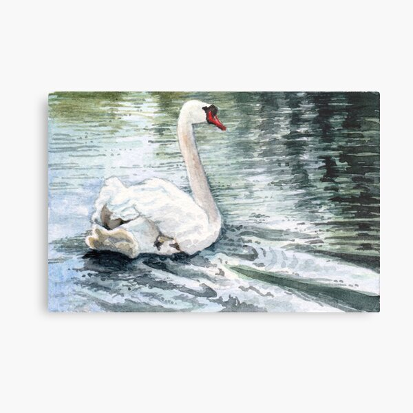 Gliding Gracefully, a Beautiful White Swan Watercolor so Peaceful Metal Print
