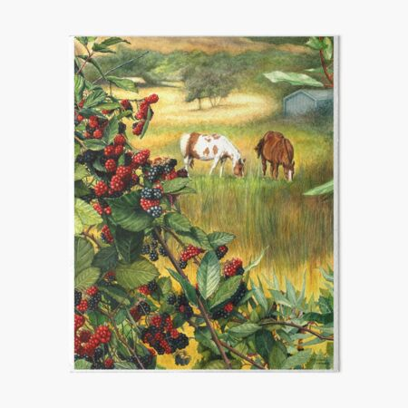Watercolor Landscape Horse Ranch Wild Blackberries Abundance Art Art Board Print