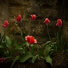 Pink Tulip's The Wall by Gregory Colvin