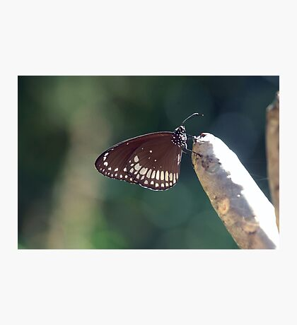 Butterfly in the garden Photographic Print