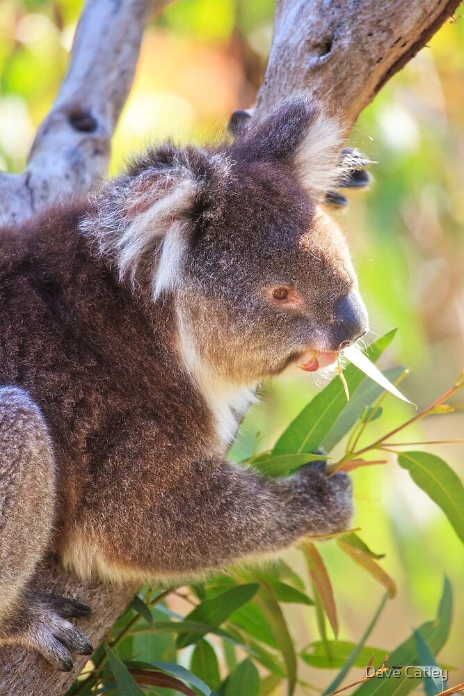 Feed Me, Yanchep National Park by Dave Catley