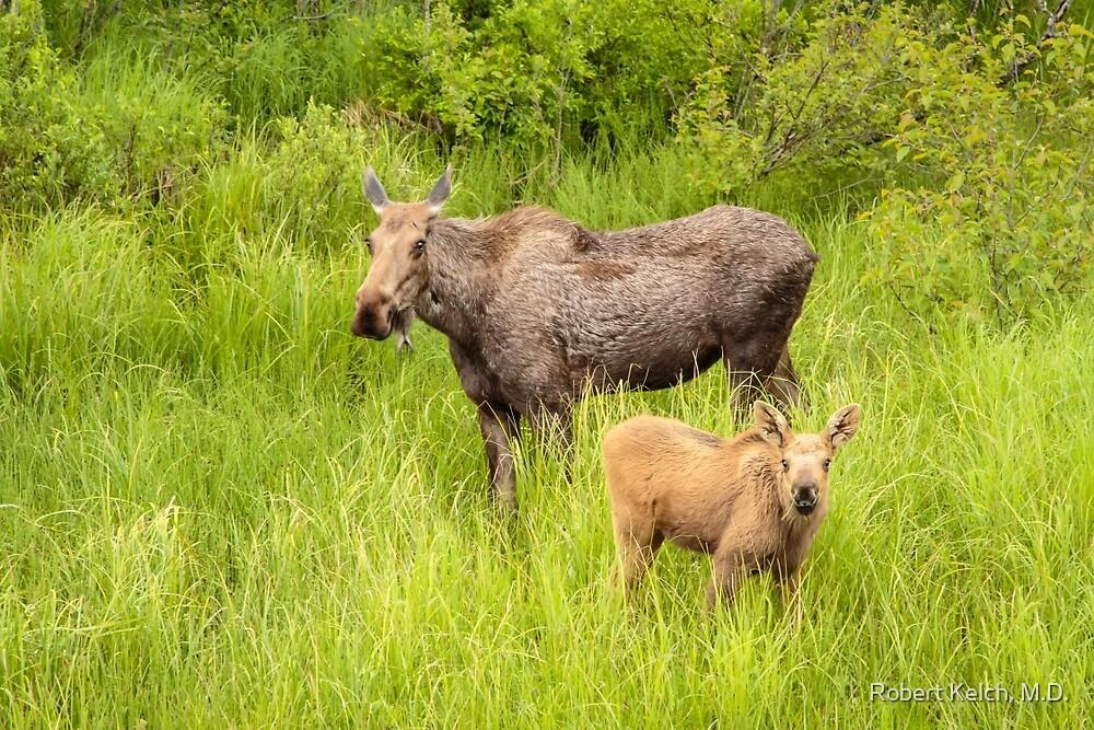 Mother Moose and Calf - Kenai Peninsula by Robert Kelch, M.D.