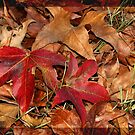 Autumn colours 1 by MikeO