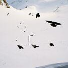 birds by ben reid