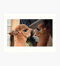 Alpaca babies Art Print