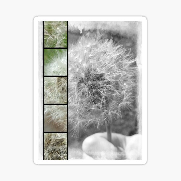 Dandelion Seedhead Sticker