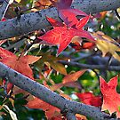 Autumn colours 2 by MikeO