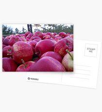 Postales Bin full of Gala apples