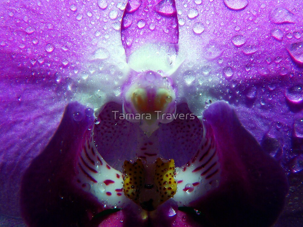 Purple Rain by Tamara Travers