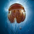 Another Red Jellyfish by Ross Gudgeon