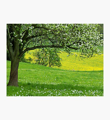 Spring in Voeren Photographic Print