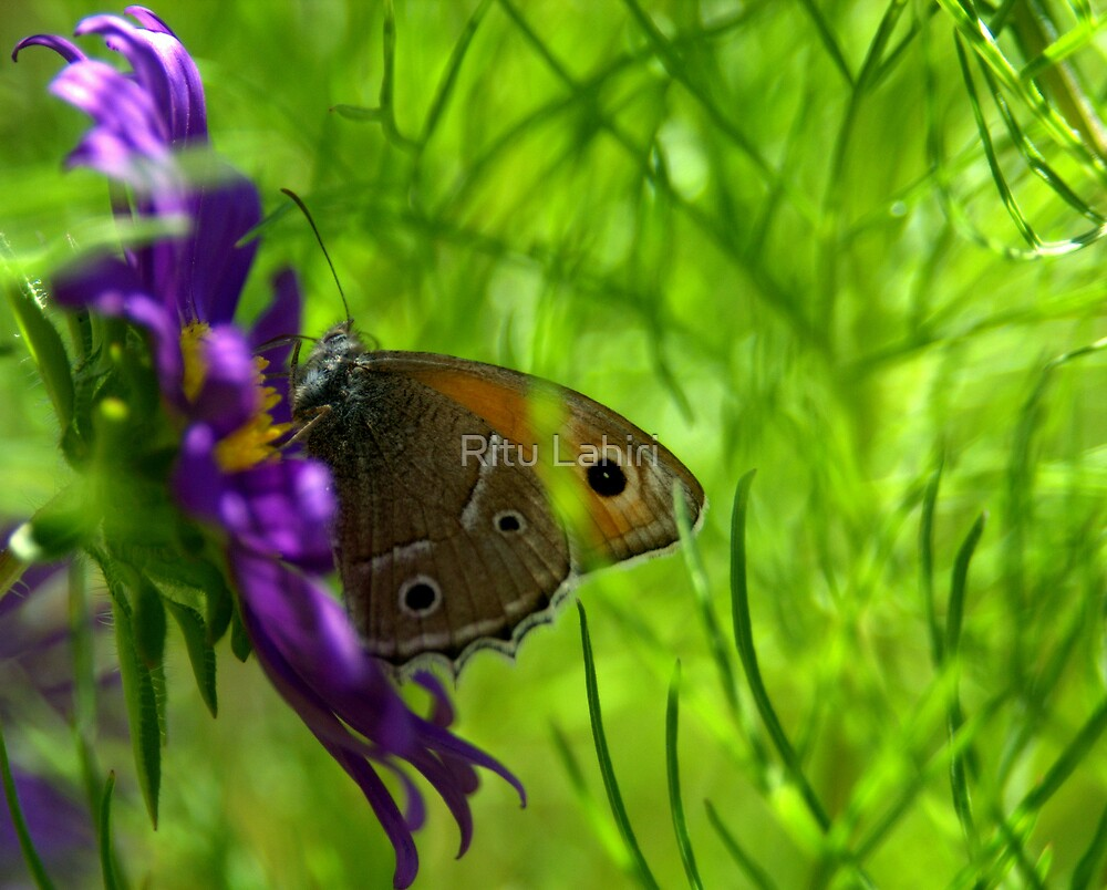"""Just living is not enough,"" said the butterfly, ""one must have sunshine, freedom and a little flower."" by Ritu Lahiri"