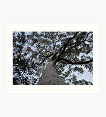 Corymbia maculata Art Print