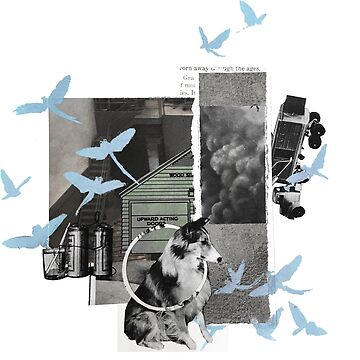 collie Collage by secondseed