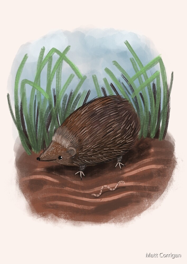 Hedgehog by Matt Corrigan