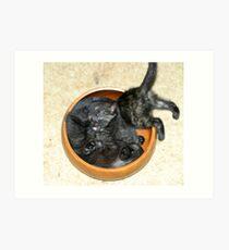 Kitty Bowl  Art Print