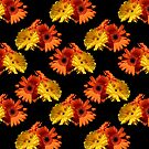 Daisy Day Yellow and Orange daisies on black background by Martha Johnson