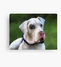Leo the Great Dane Canvas Print