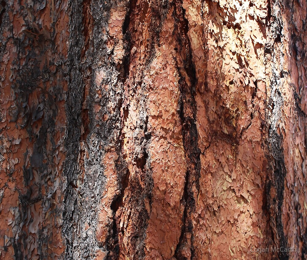 Red and Grey Bark 4 by Logan McCarthy