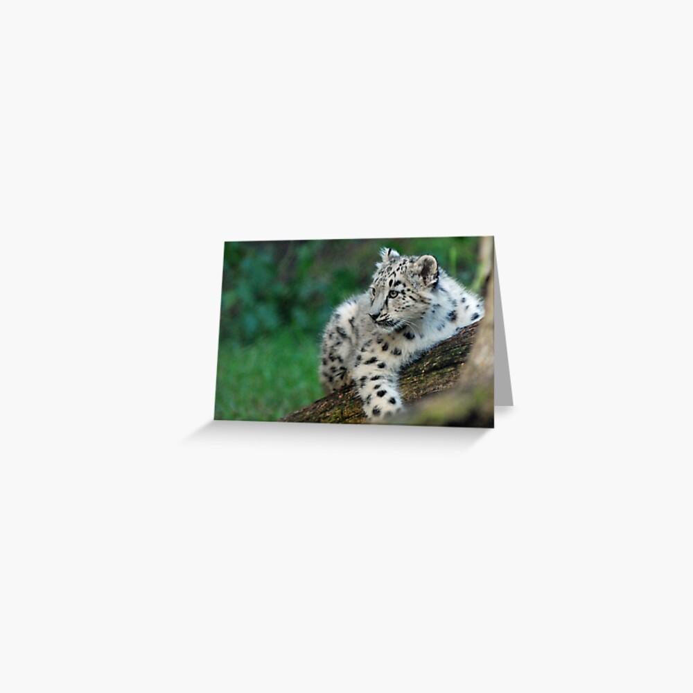 Snow Leopard Cub Greeting Card