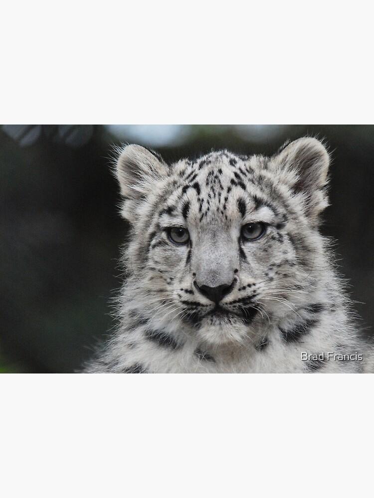 Snow Leopard Cub by bfra