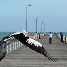 Pelican Pier Flight by Jerry Walter