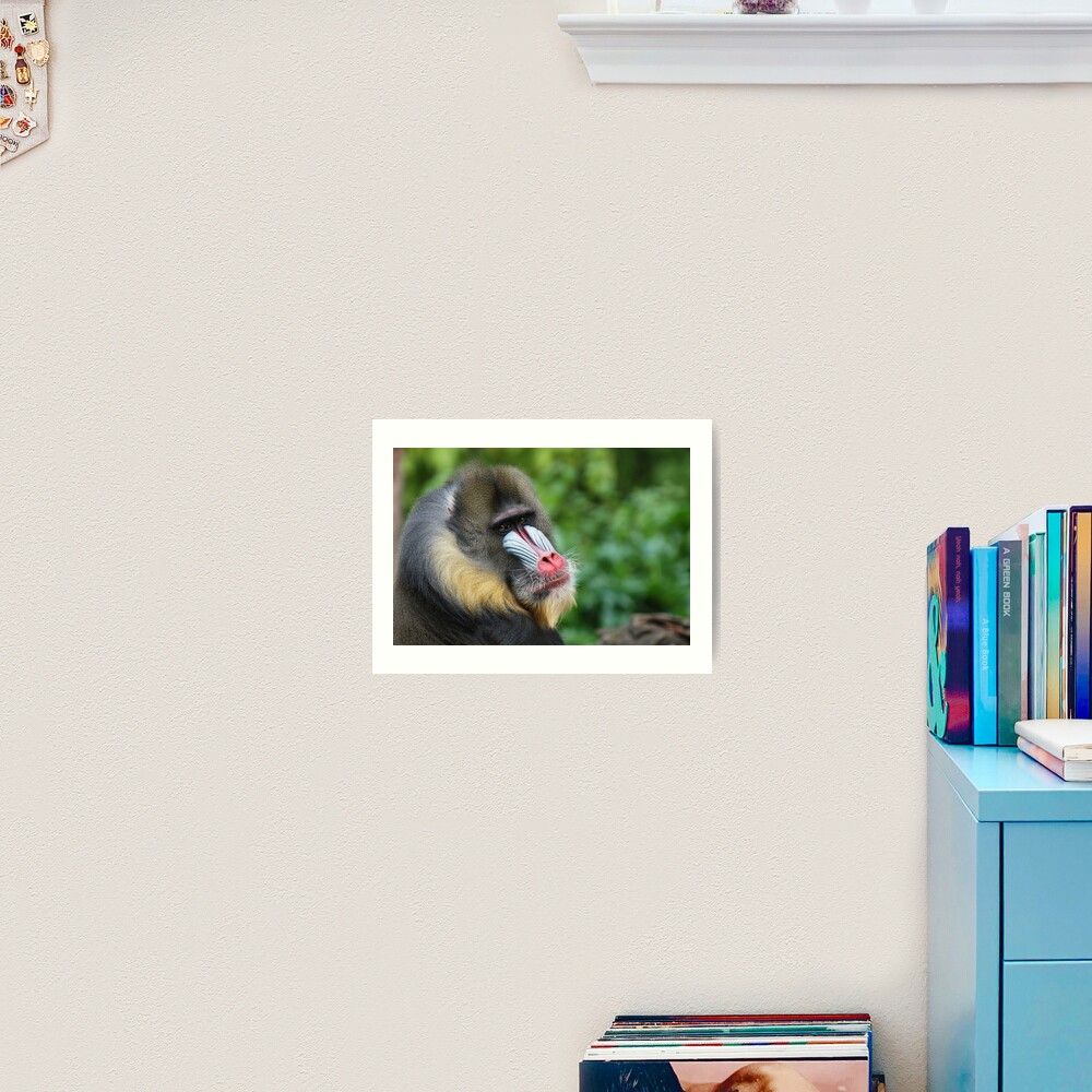 Male Mandrill Art Print