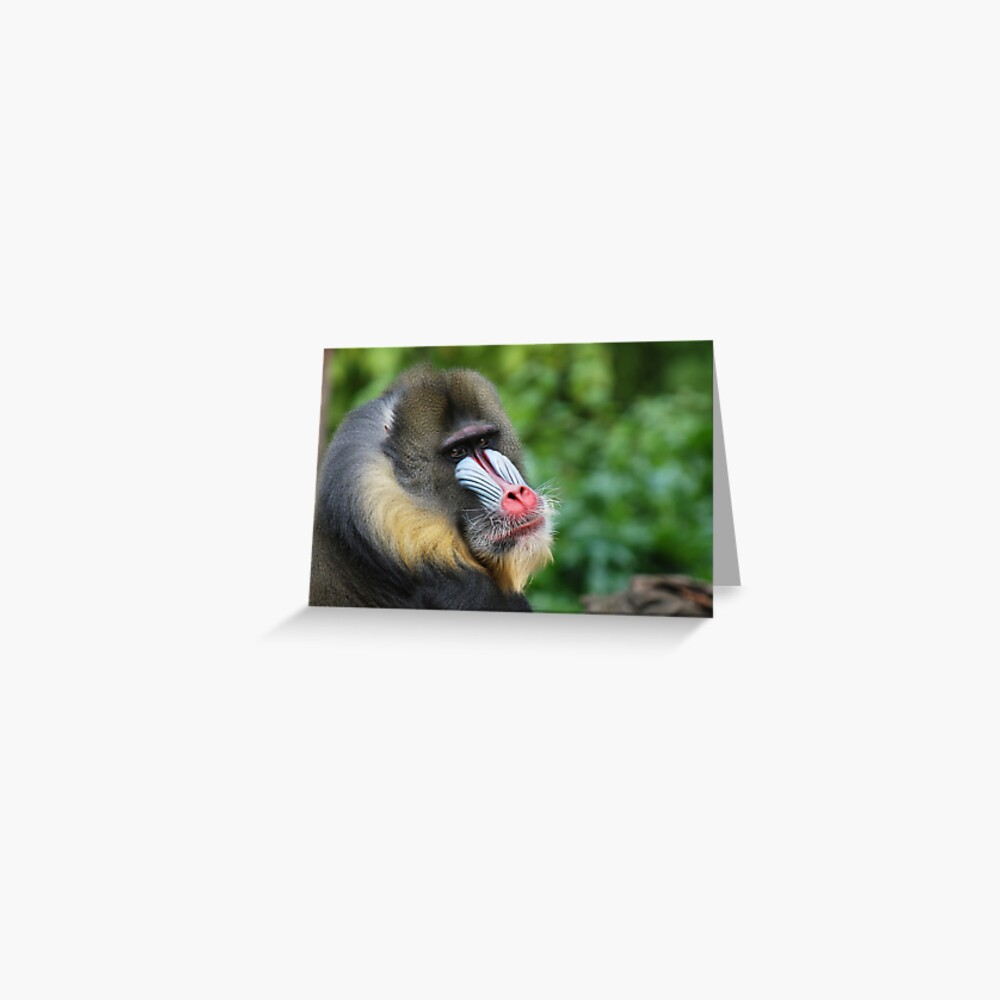 Male Mandrill Greeting Card
