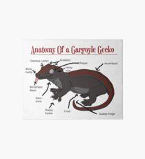 Lámina rígida Anatomía de una gárgola Gecko