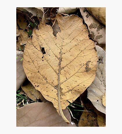 Dry Leave Photographic Print