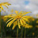 SPRING PLEASURE - Al die veld is vrolik.... by Magriet Meintjes
