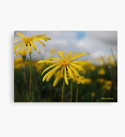 SPRING PLEASURE - Al die veld is vrolik.... Canvas Print