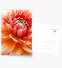 Dahlia Postcards