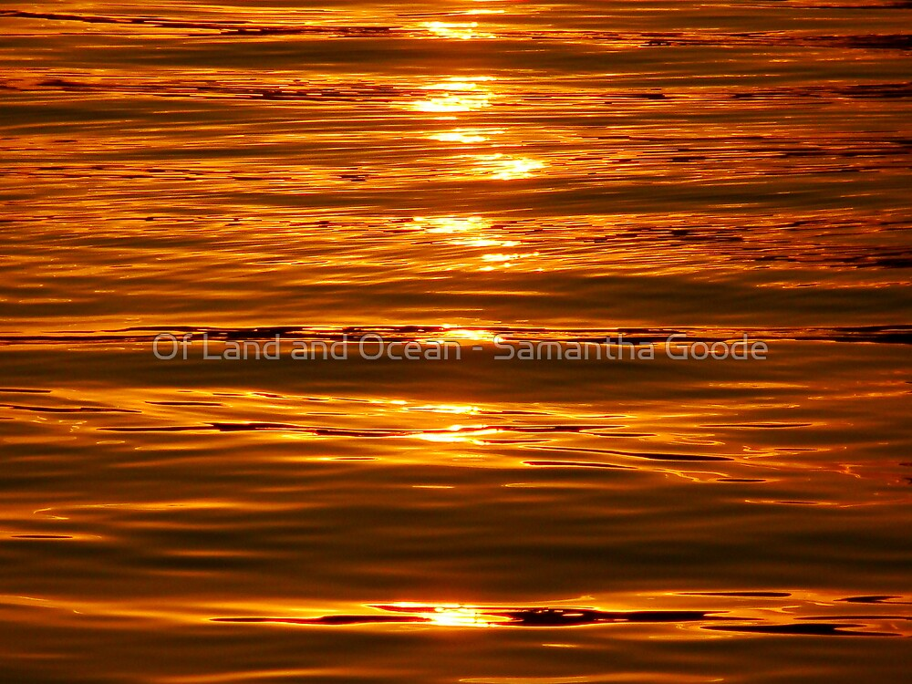 Golden Light on the Water  by Of Land & Ocean - Samantha Goode
