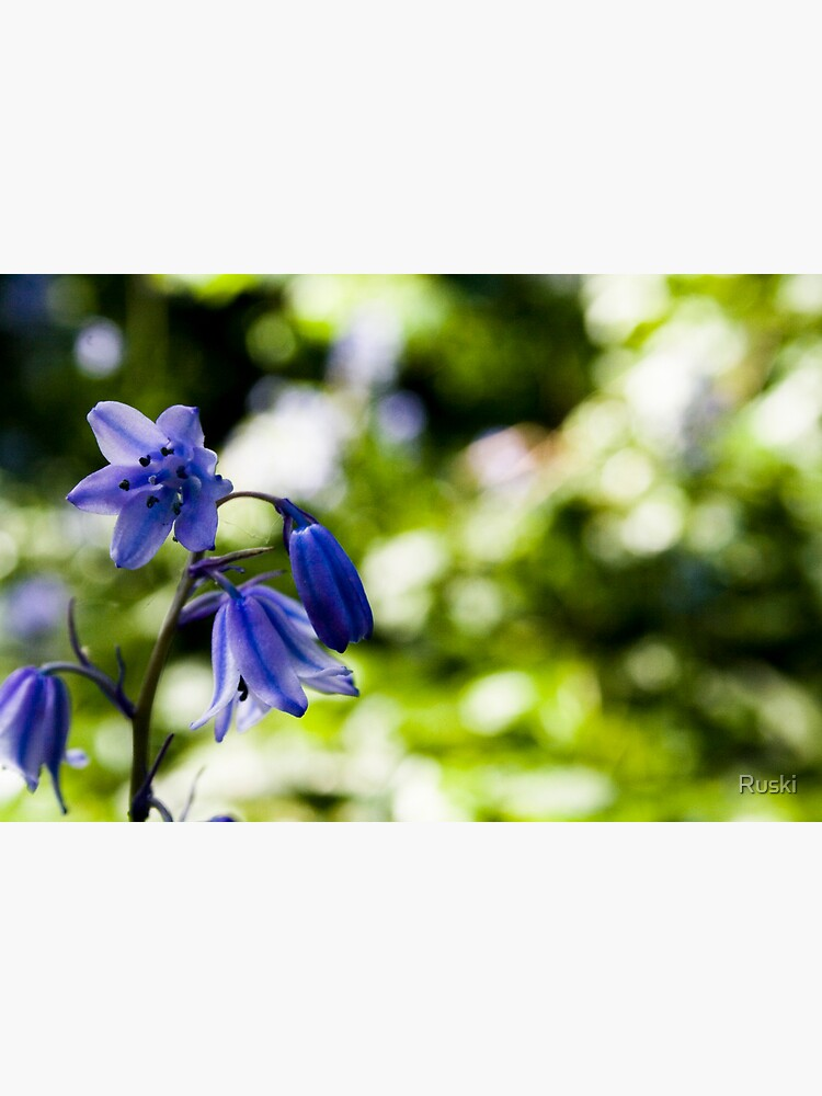 Spanish Bluebell by Ruski