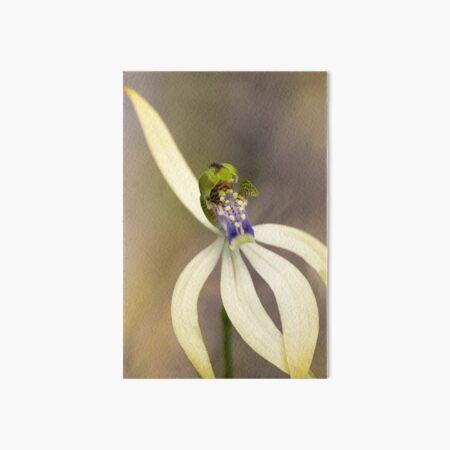 Leafless Orchid Art Board Print