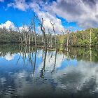 Warperup Creek by Paul Amyes