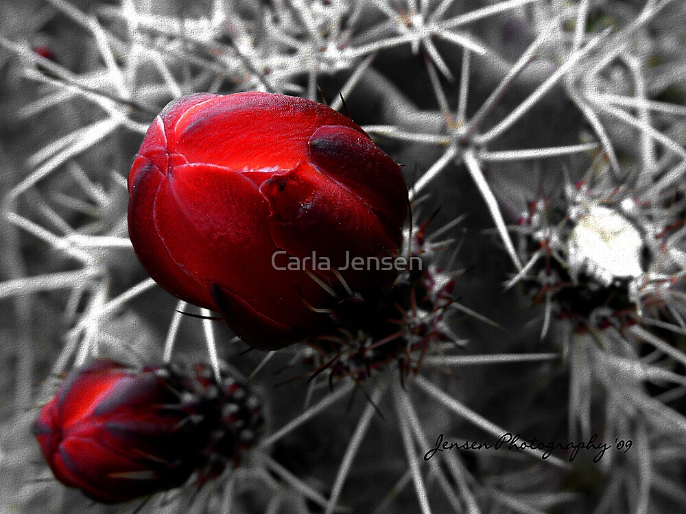 If There Be Torns by Carla Jensen