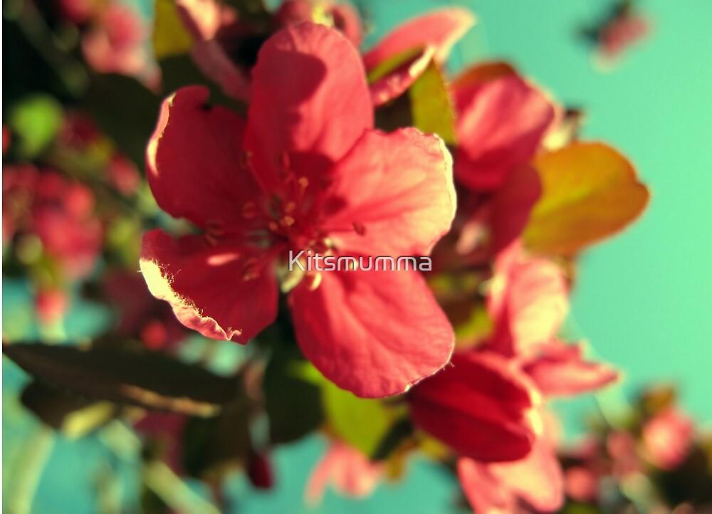 Vintage Bloom by Kitsmumma