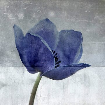 Blue Poppy by Kitsmumma
