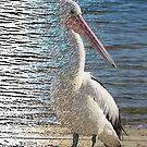 Digiatally enhanced Photograph Pelican Fliter Merge Line Art by Jillian Crider