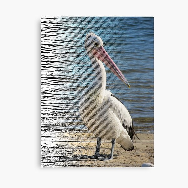 Digiatally enhanced Photograph Pelican Fliter Merge Line Art Canvas Print