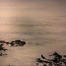 Silver Dawn by Shauna  Noble