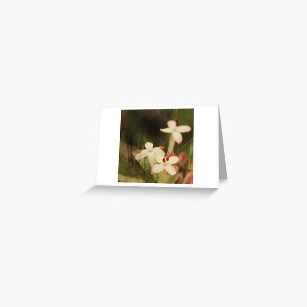 Pink Riceflowers Greeting Card