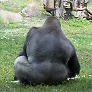 Gorilla by Dan Shiels