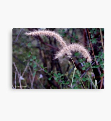 BEAUTY IN THE EYE OF THE BEHOLDER Canvas Print