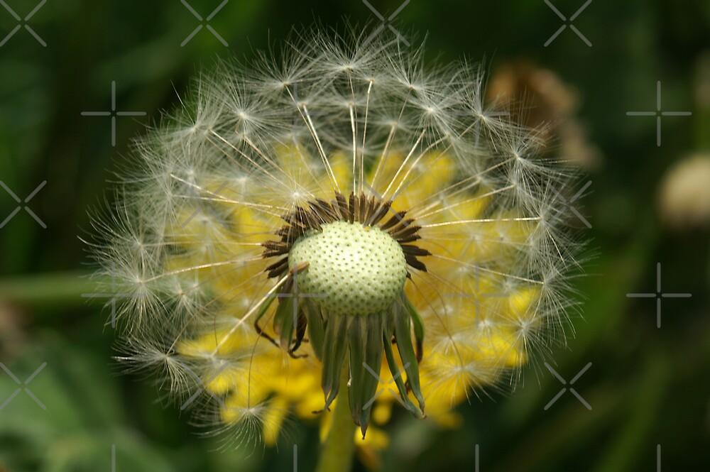 make a wish by poupoune