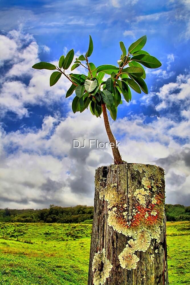 One Tree One Post by DJ Florek