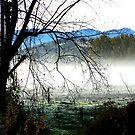 'Fosangs Land' King Valley, Victoria by Jayne Healy
